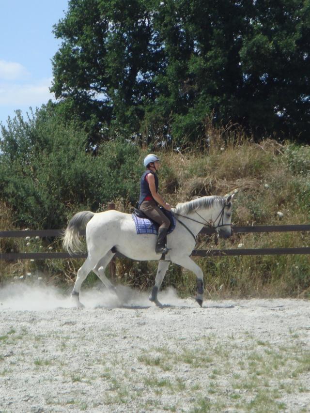 Un cheval sur la main Dsc06514