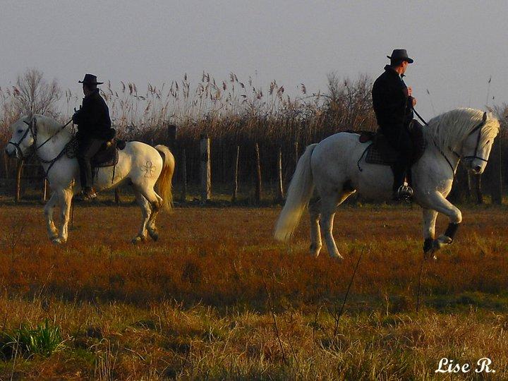 Race - Le Camargue  22472610