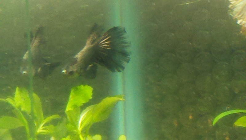 Irridescent Black or Dark Copper? 2011-013