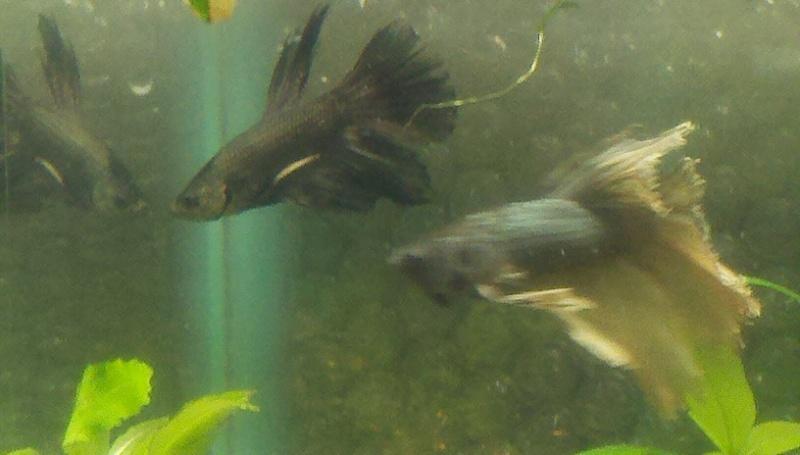 Irridescent Black or Dark Copper? 2011-014