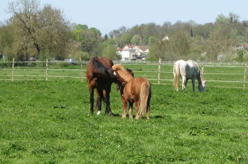 cohabitation chevaux-shetland : est-ce possible ? - Page 2 004bis10