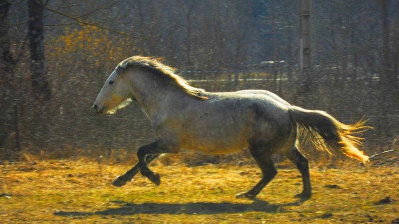 "Concours : ""cheval au galop"" GAGNANTE : TItâne Sam_4110"