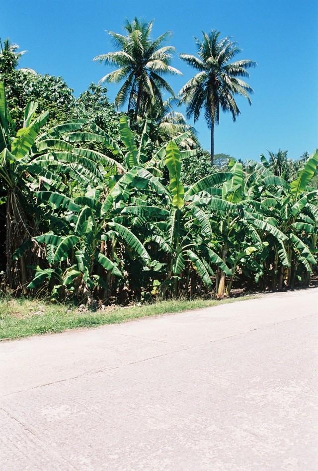 escapade en mer du sud  Cocote10