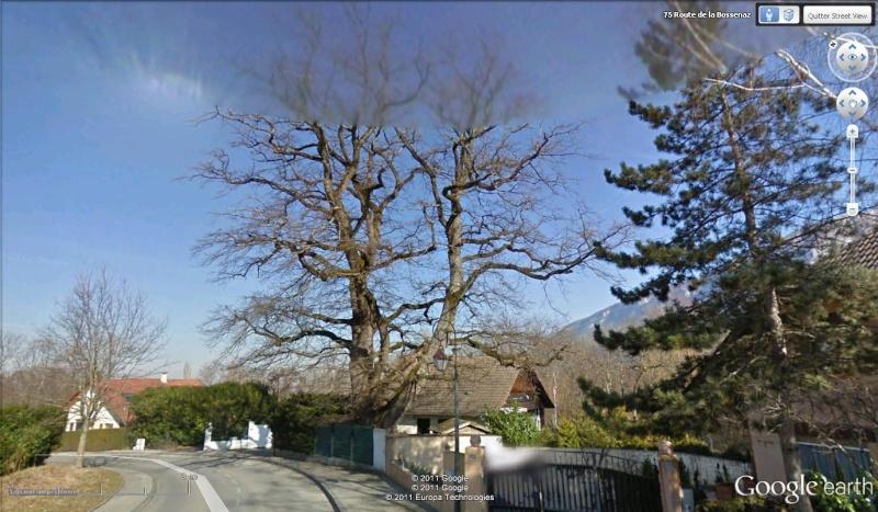 STREET VIEW : les arbres remarquables en France Arb110