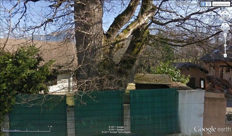 STREET VIEW : les arbres remarquables en France Arb210
