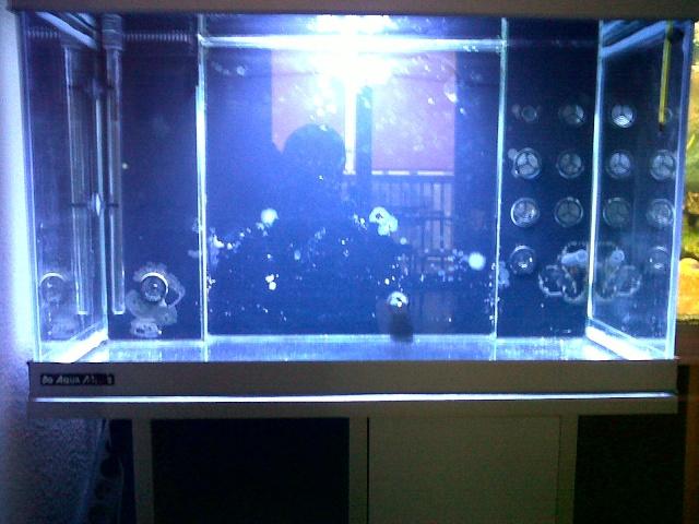Démarrage d'un Aquamédic 288L  Bagles10