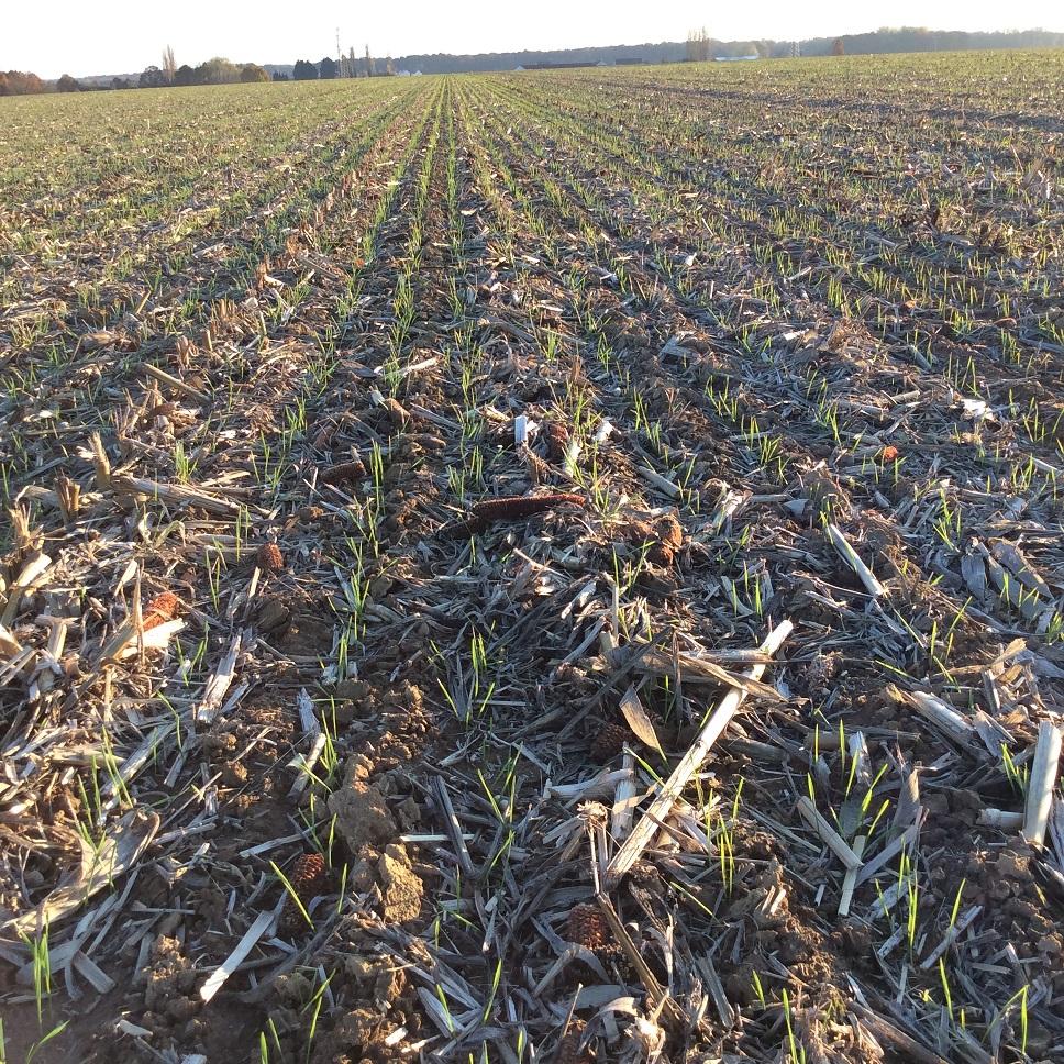 semis de cereales 2018-19 - Page 16 Img_0619