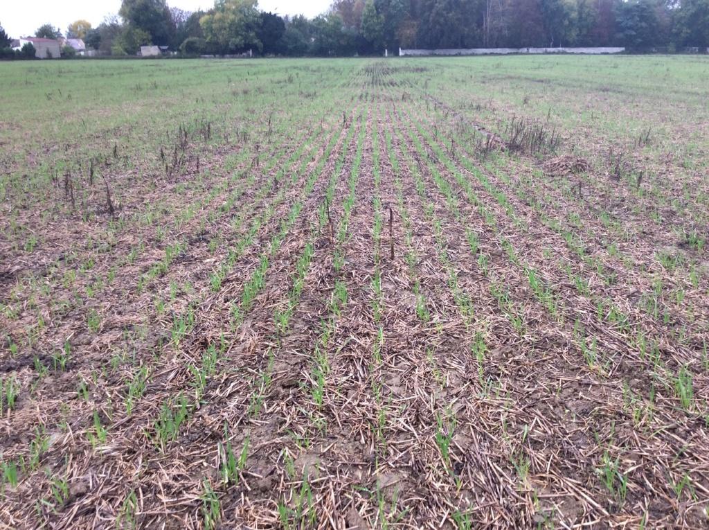 suivis blé 2020 Img_1240