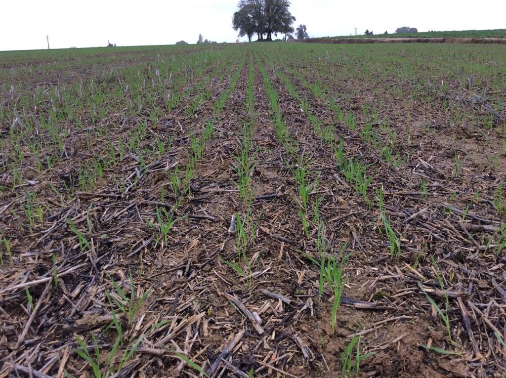 suivis blé 2020 Img_1242