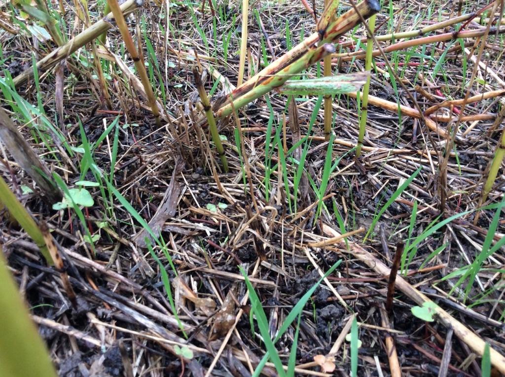 suivis blé 2020 Img_1246