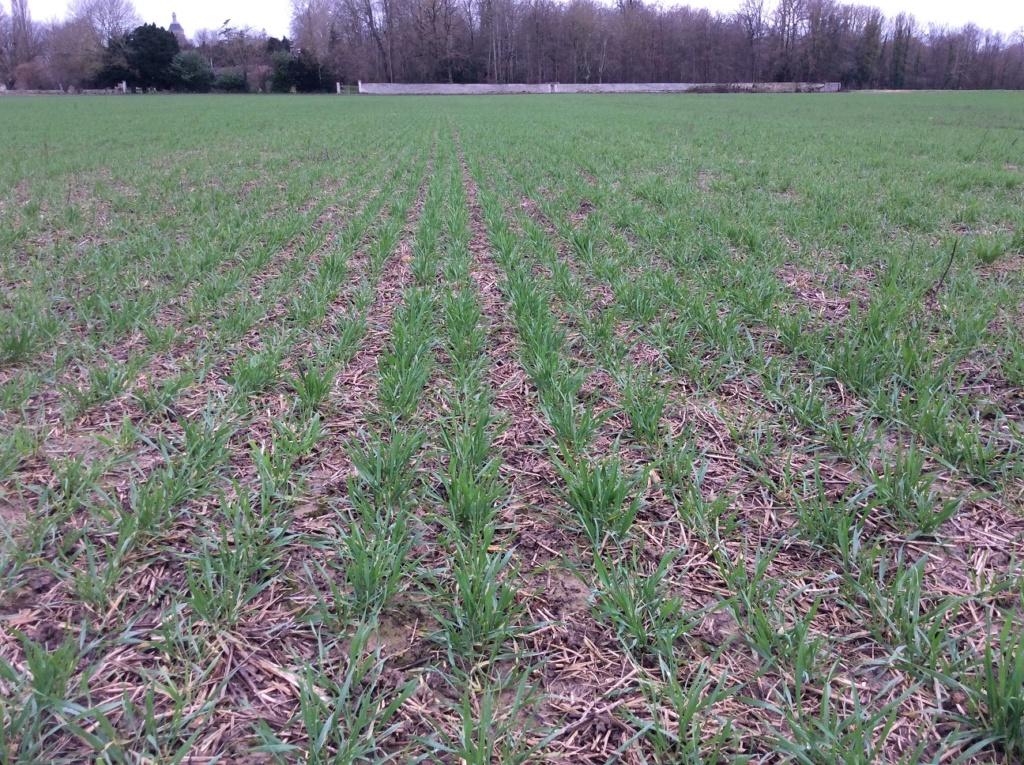 suivis blé 2020 - Page 2 Img_1412