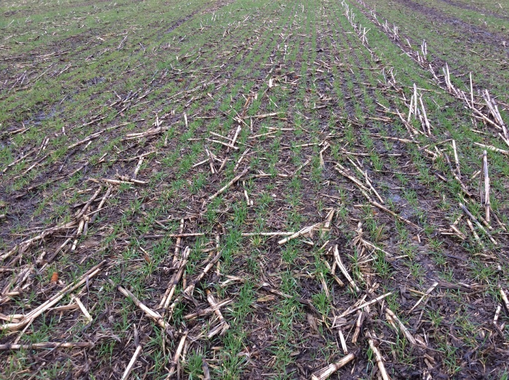 suivis blé 2020 - Page 2 Img_1414