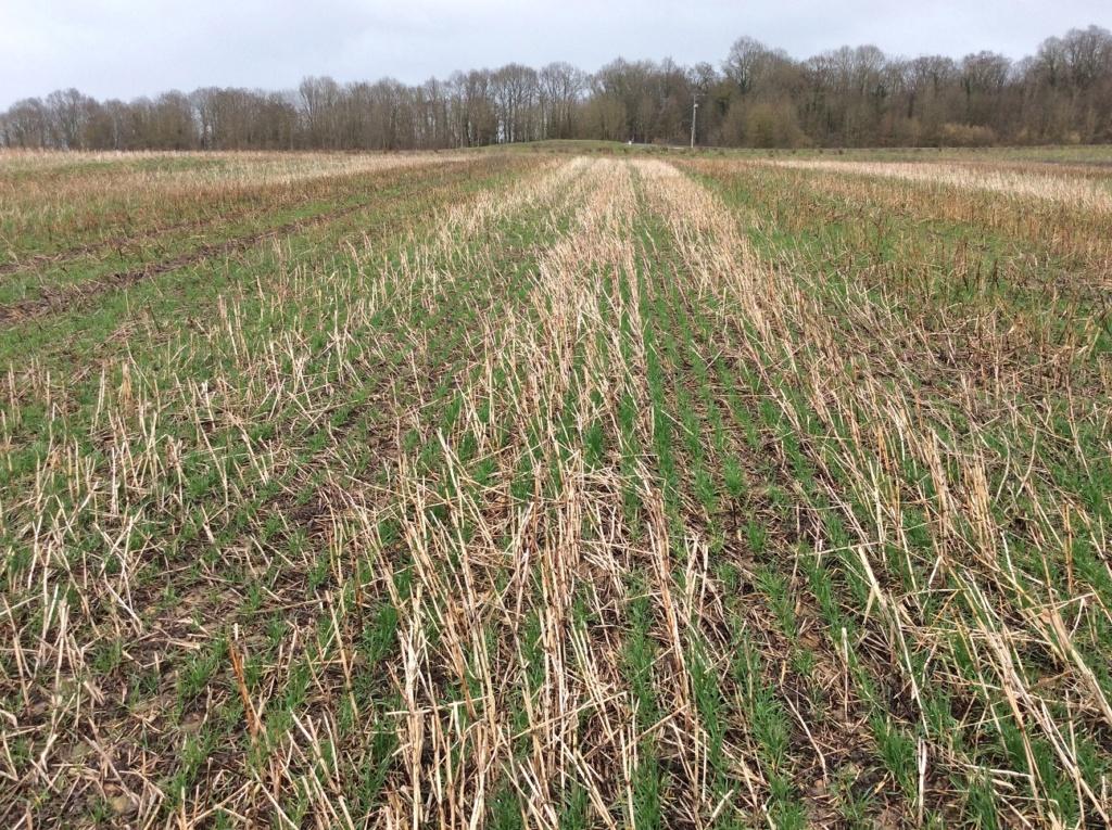 suivis blé 2020 - Page 2 Img_1416