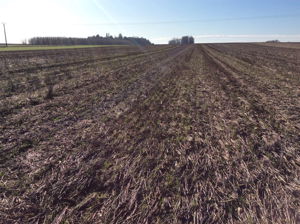 suivis blé 2020 - Page 3 Img_1425