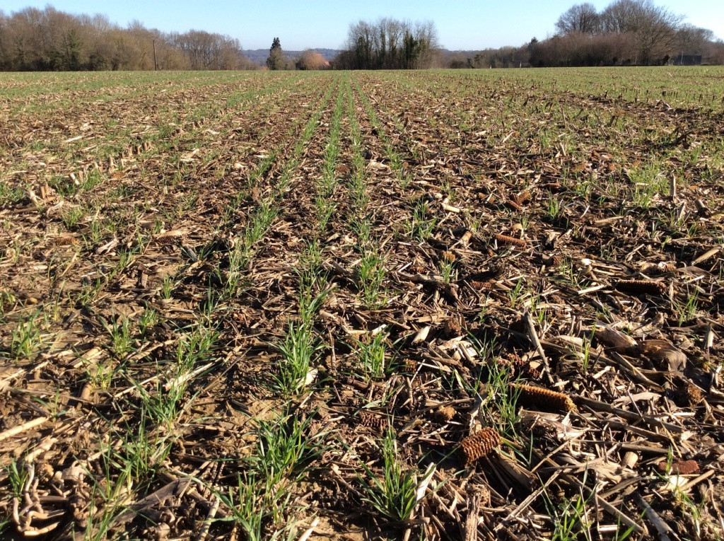 suivis blé 2020 - Page 3 Img_1718