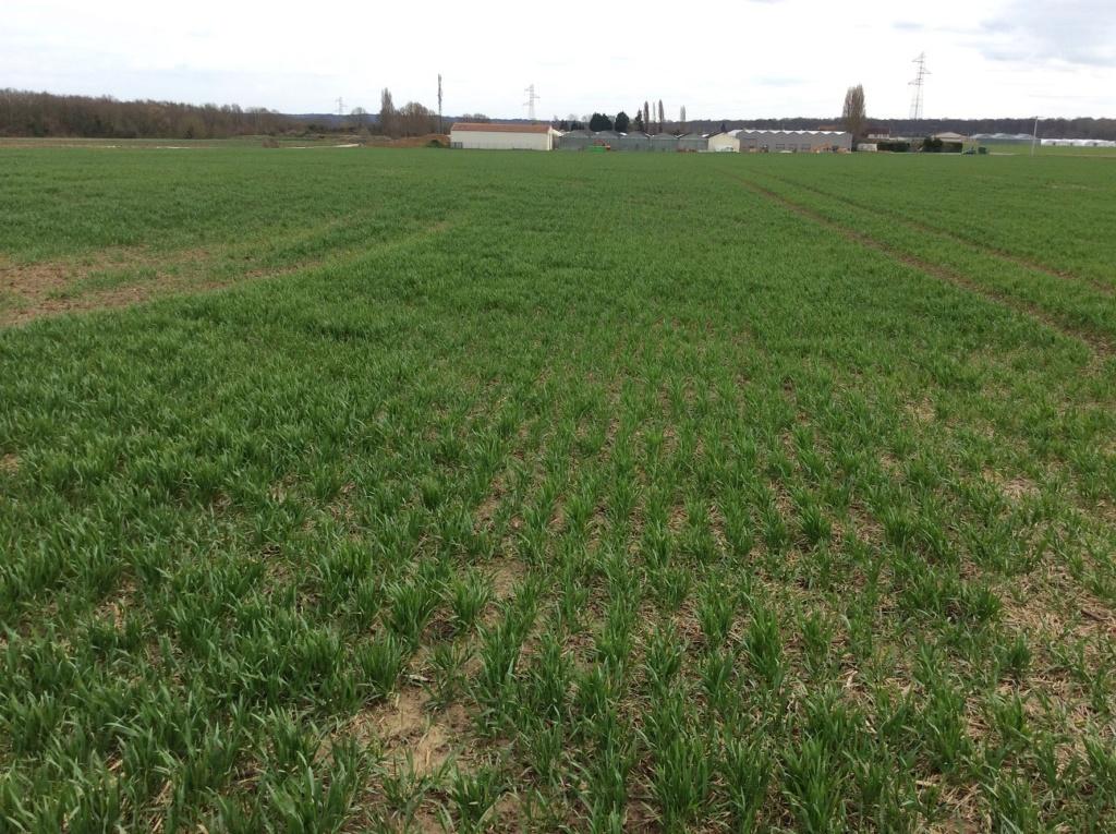 suivis blé 2020 - Page 4 Img_1730