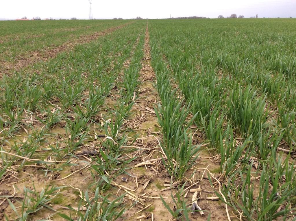 suivis blé 2020 - Page 4 Img_1731