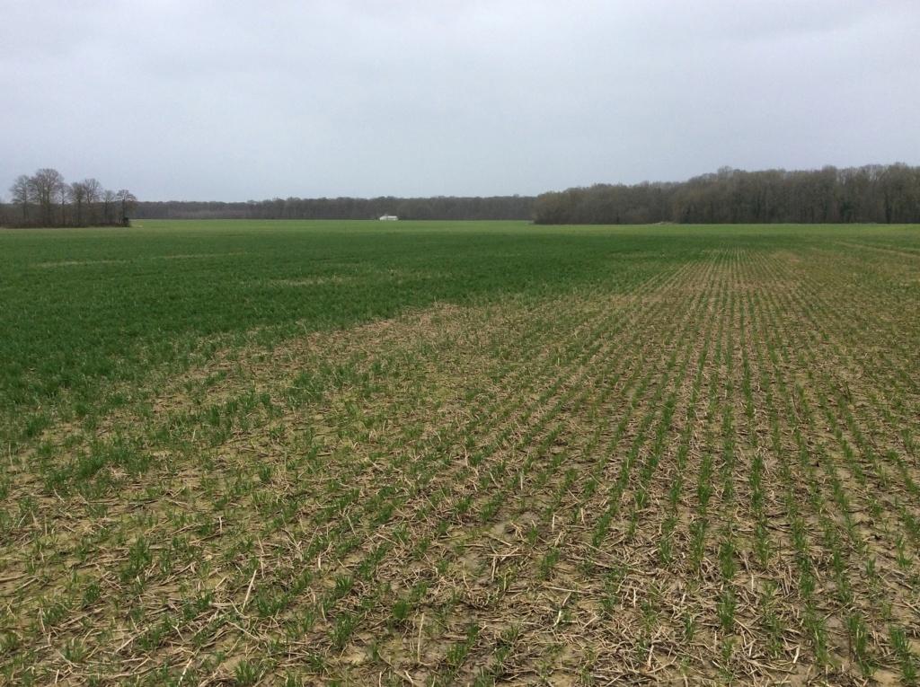 suivis blé 2020 - Page 4 Img_1810