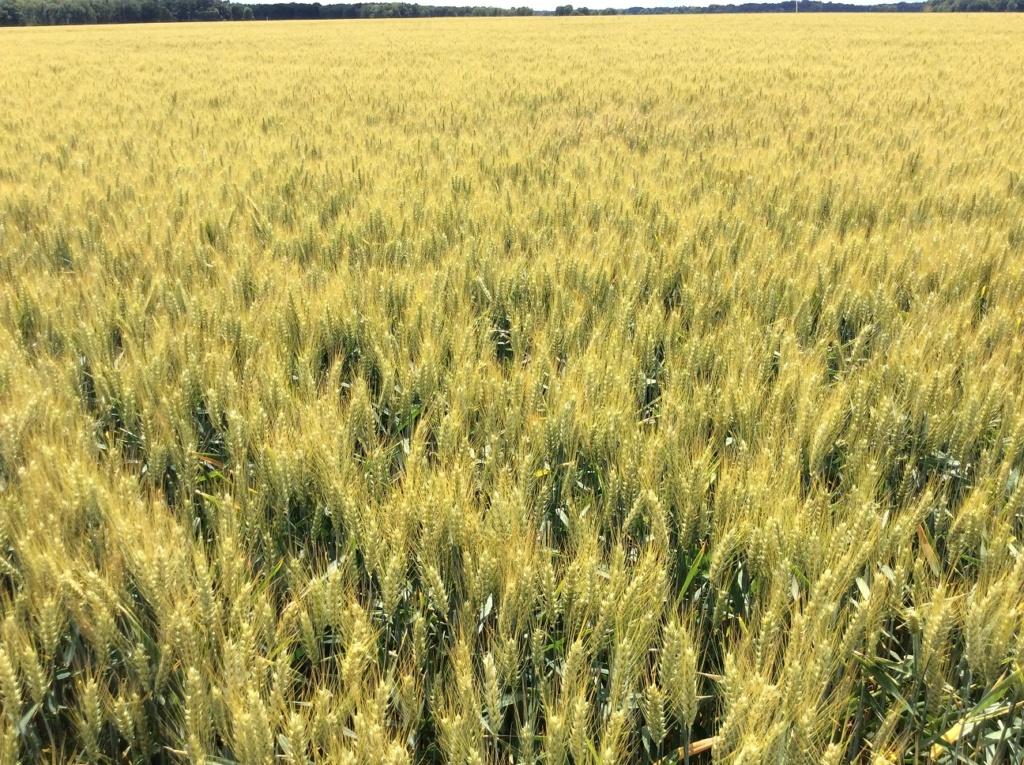 suivis blé 2020 - Page 5 Img_2048