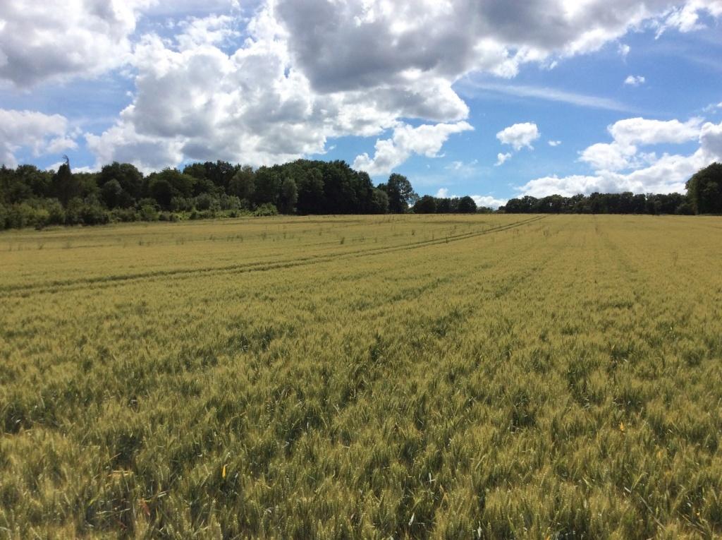 suivis blé 2020 - Page 5 Img_2051