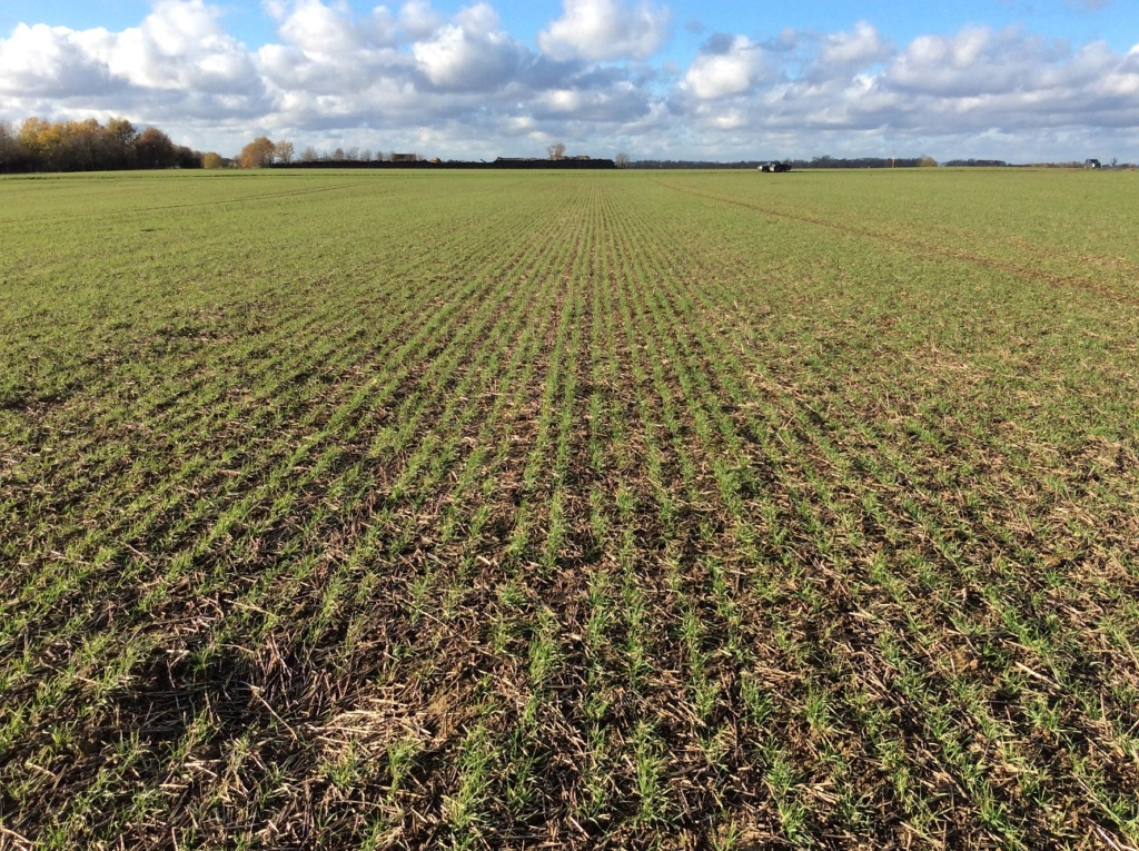 suivi blé 2021 - Page 3 Img_2253
