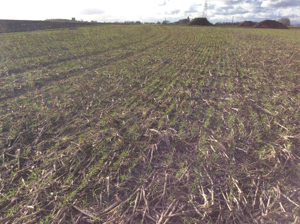 suivi blé 2021 - Page 3 Img_2311