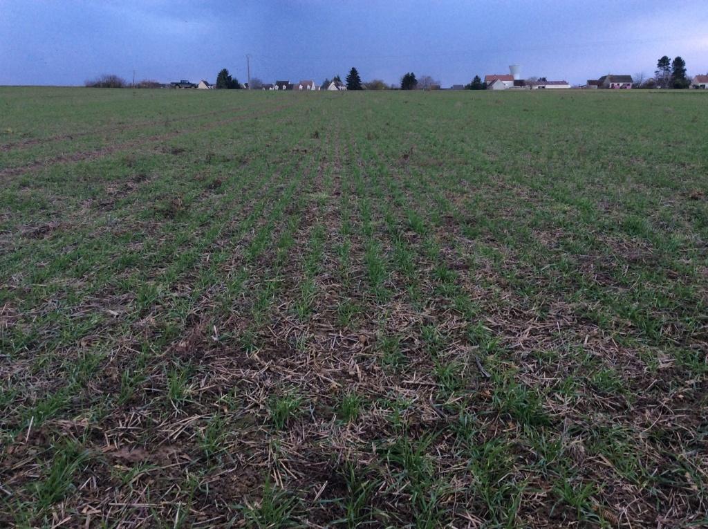 suivi blé 2021 - Page 3 Img_2317