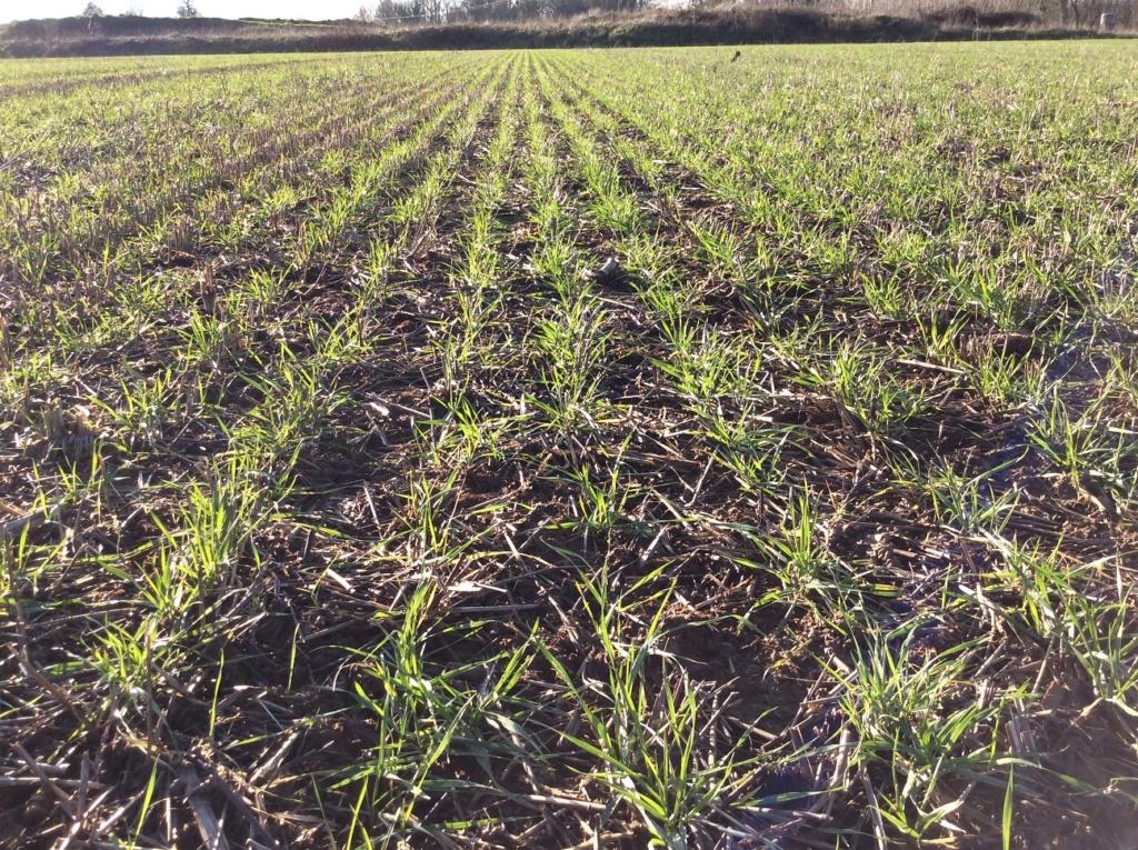 suivi blé 2021 Img_2411