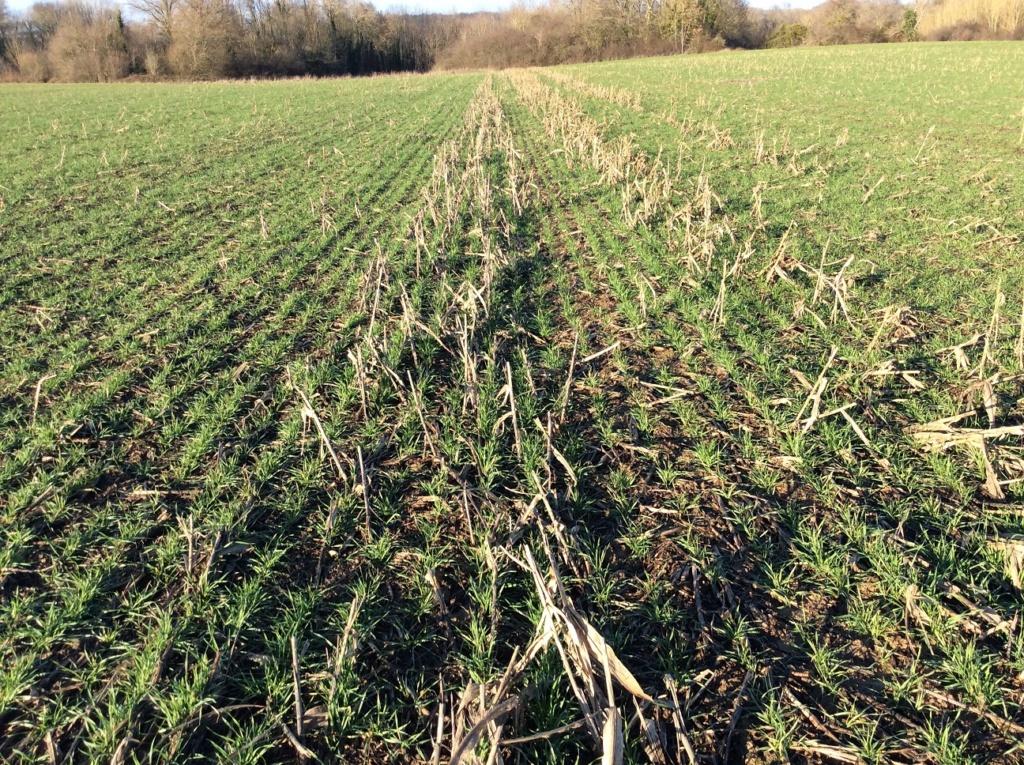 suivi blé 2021 Img_2412