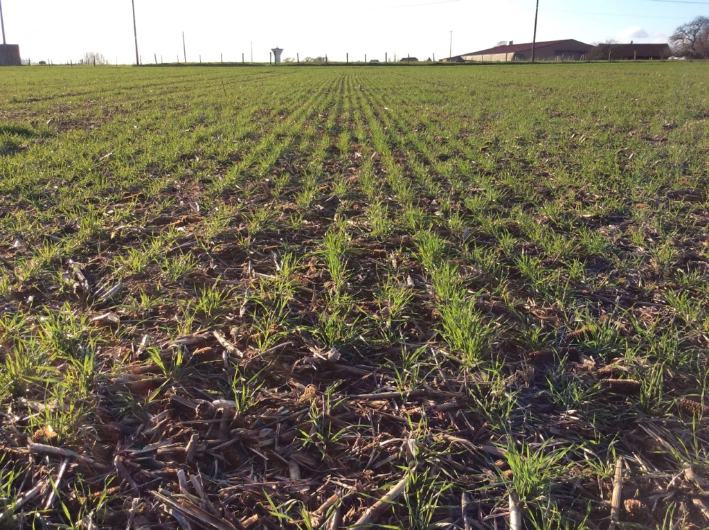 suivi blé 2021 Img_2413