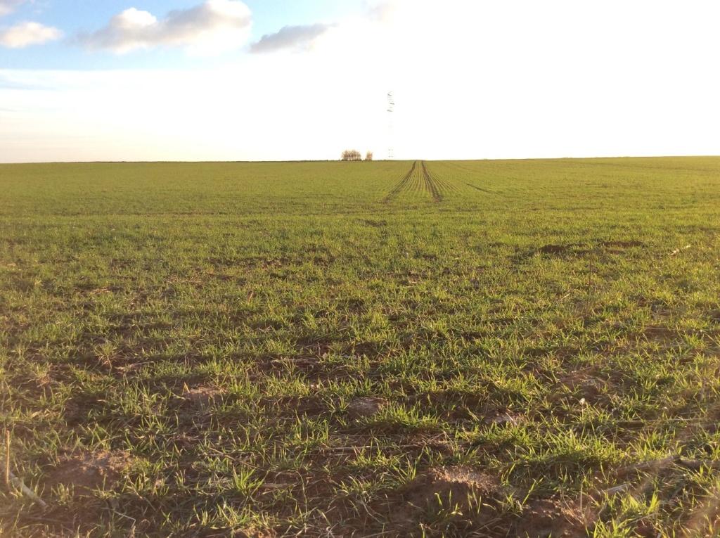 suivi blé 2021 Img_2415