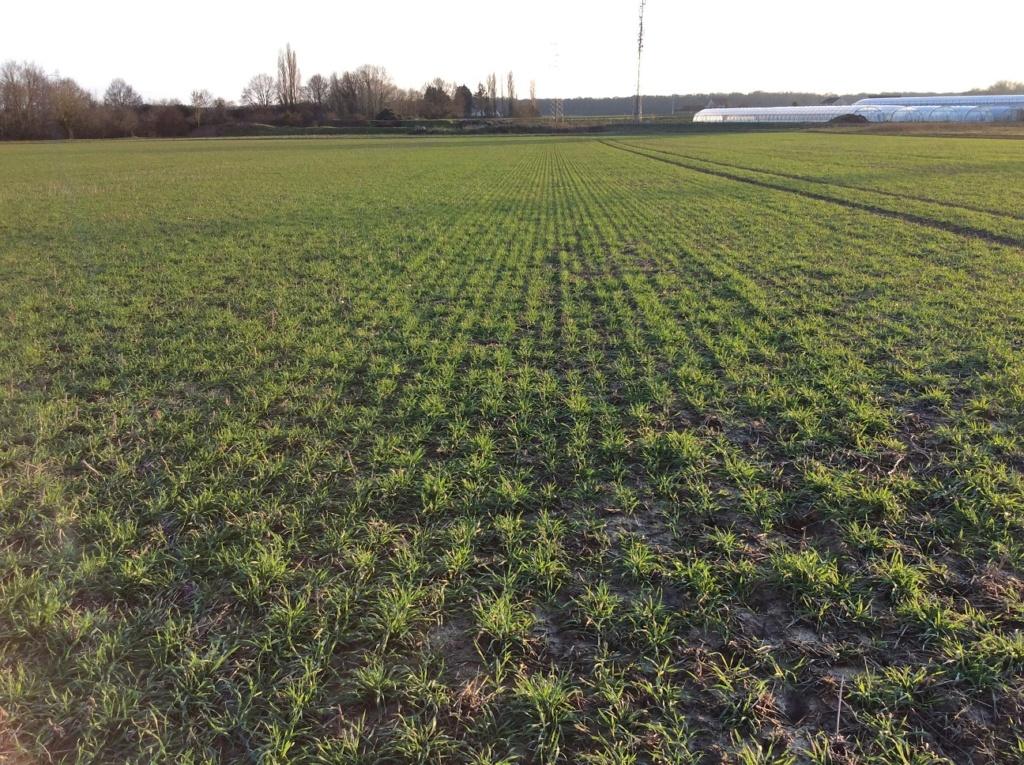 suivi blé 2021 Img_2416