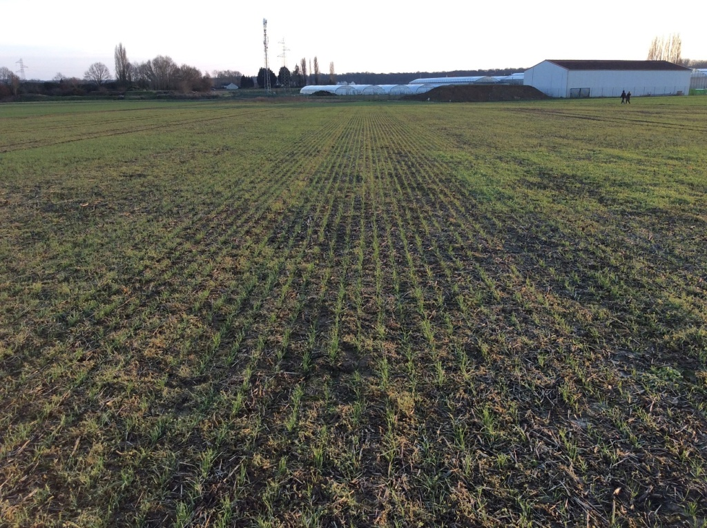 suivi blé 2021 Img_2417