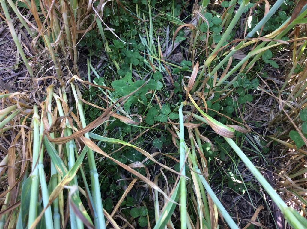 suivi blé 2021 - Page 2 Img_2626