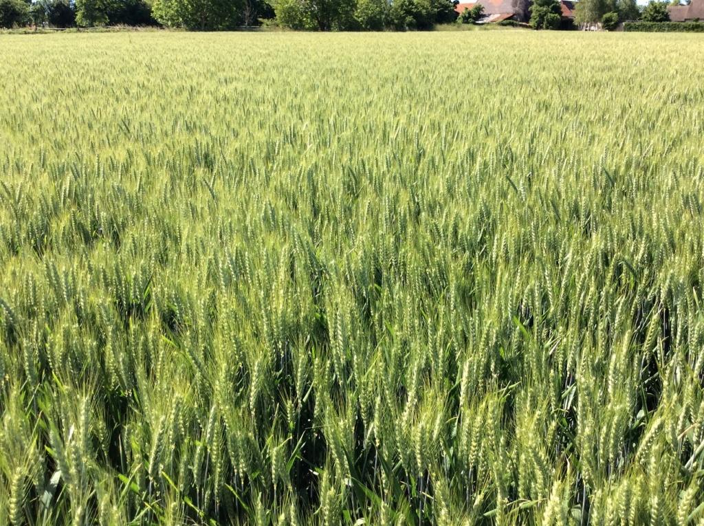 suivi blé 2021 - Page 2 Img_2628