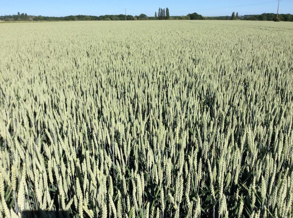 suivi blé 2021 - Page 2 Img_2633