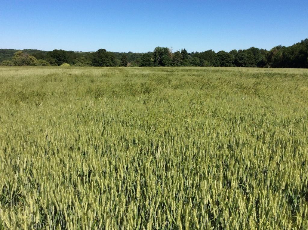 suivi blé 2021 - Page 2 Img_2634