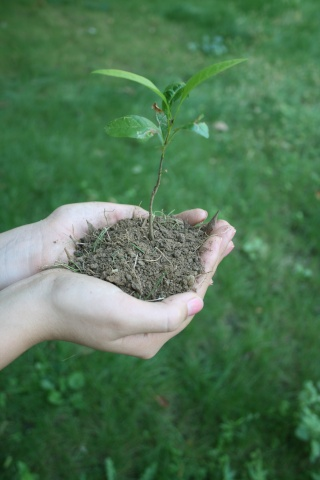 tenir une plante et son terreau dans la main... Arbre_10