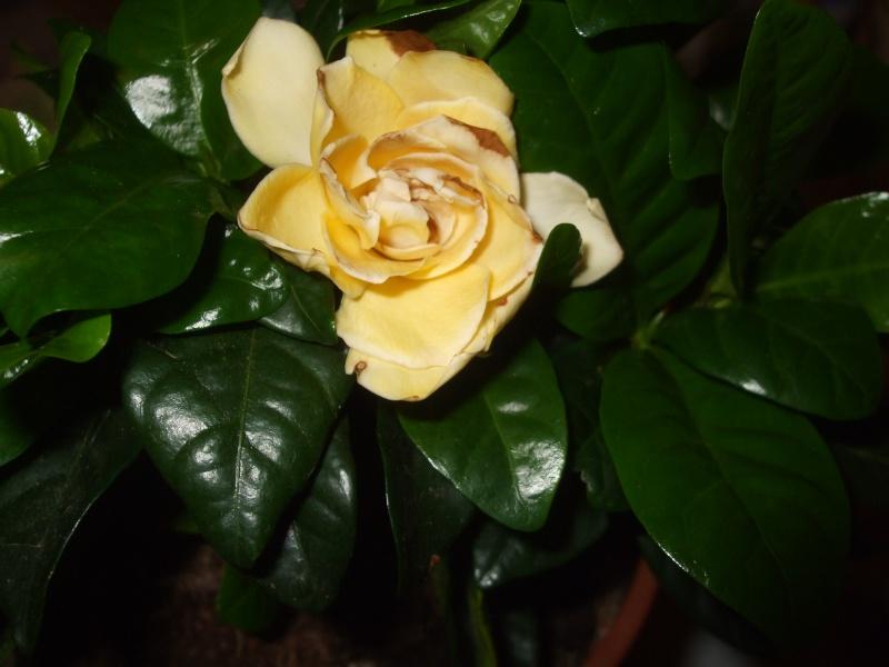 Floraisons du mois de juillet Garden10