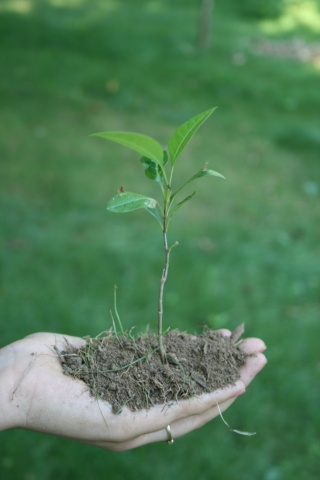 tenir une plante et son terreau dans la main... Img_2211