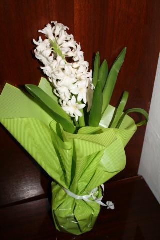 Plantation, culture et floraison des bulbes, des rhizomes, des griffes Jacint10