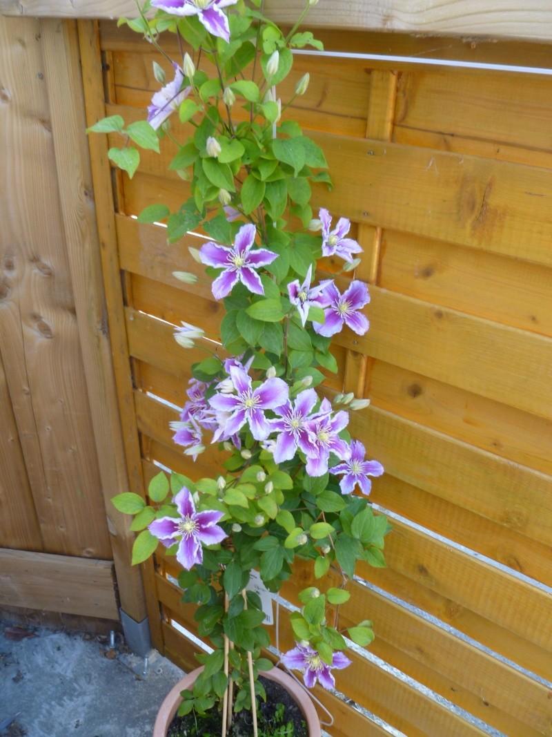 Floraisons du mois de juillet 00115