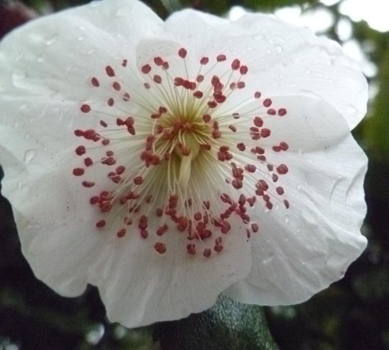 Floraisons du mois d'Août 00133