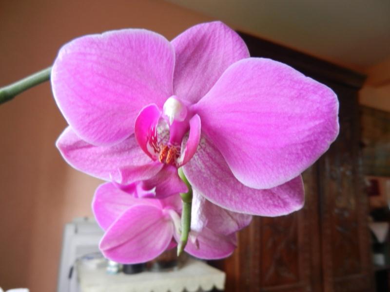 Floraisons d'intérieur  00155