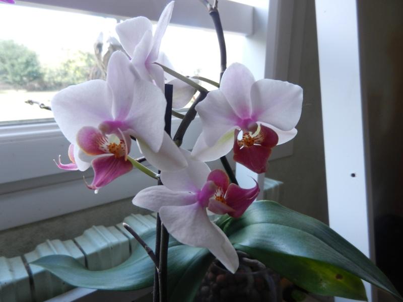 Floraisons d'intérieur  00156