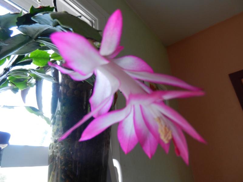 Floraisons d'intérieur  00234