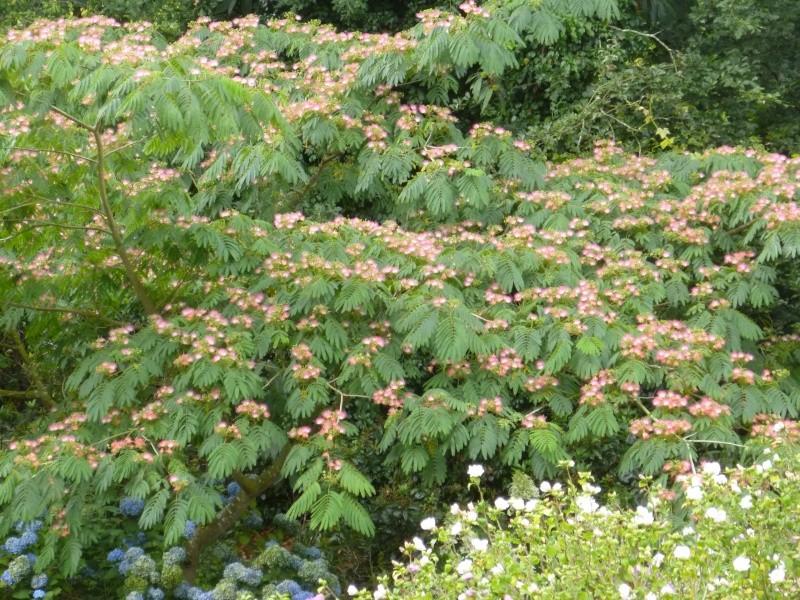 Floraisons du mois d'Août 00322