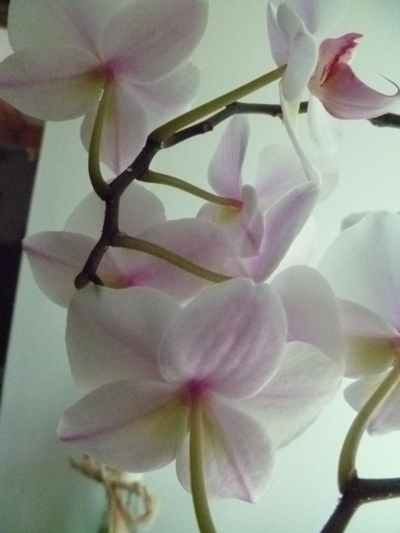 Floraisons du mois de juillet 00414