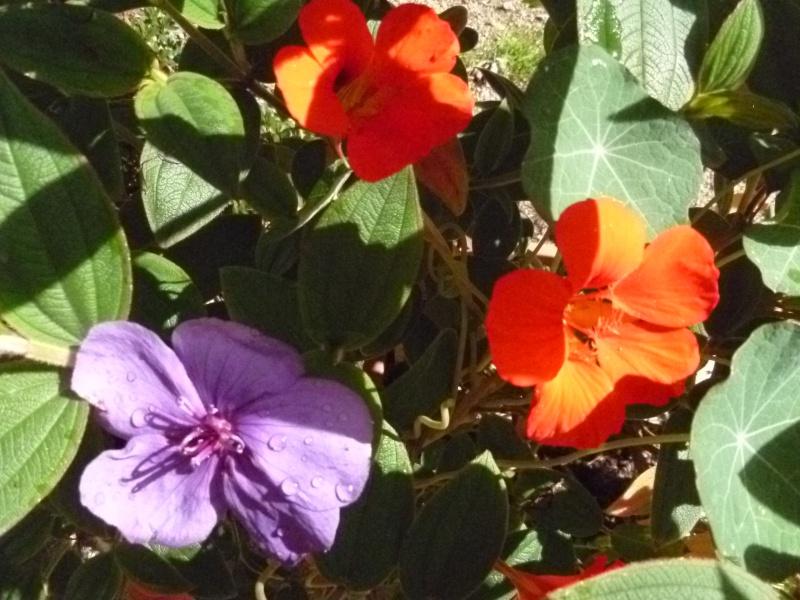 Floraisons du mois d'Août 00425