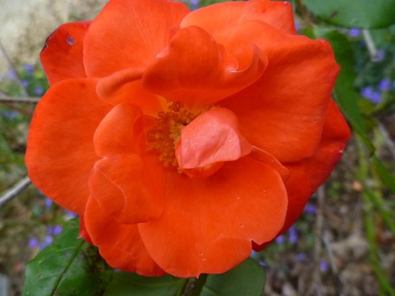 Floraisons du mois de septembre - Page 2 00429